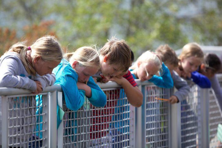Children boys girls fence